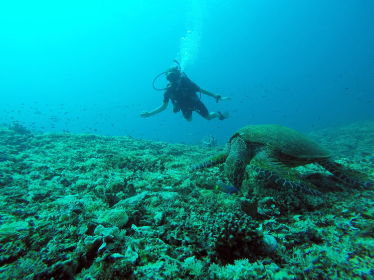 Diving with sea turtles in Gili Meno, Indonesia