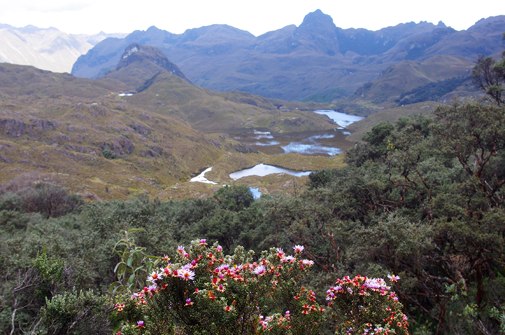 View of Cajas National Park