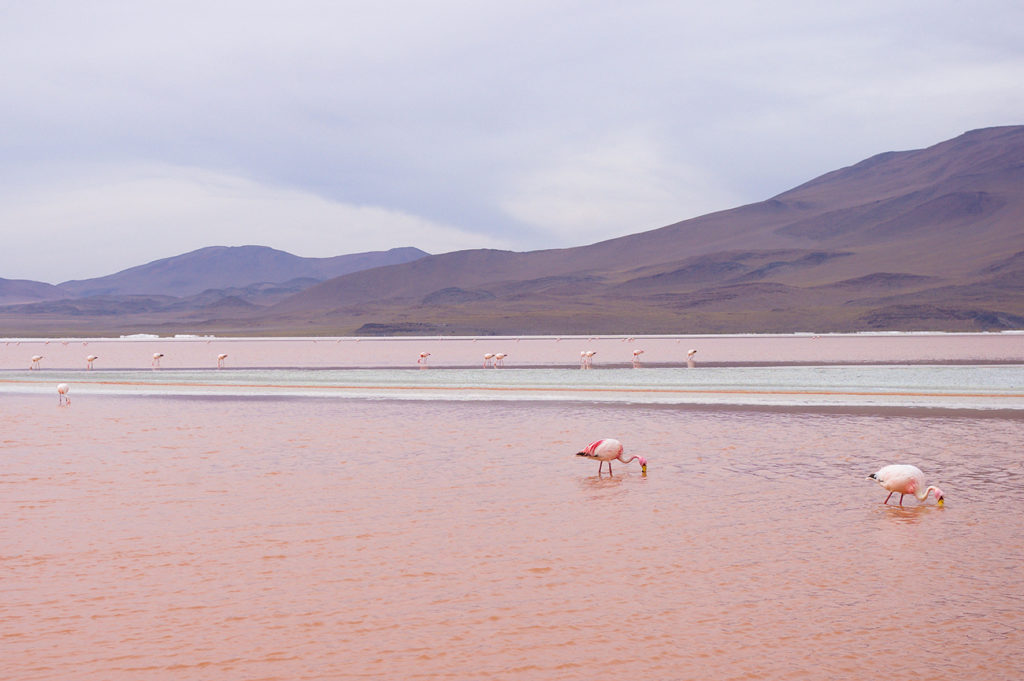 Pink Lake in Sud Lipez