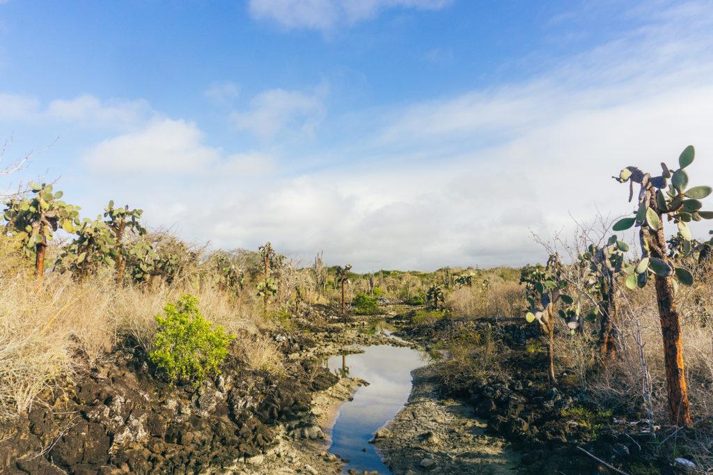 Cacti on Santa Cruz