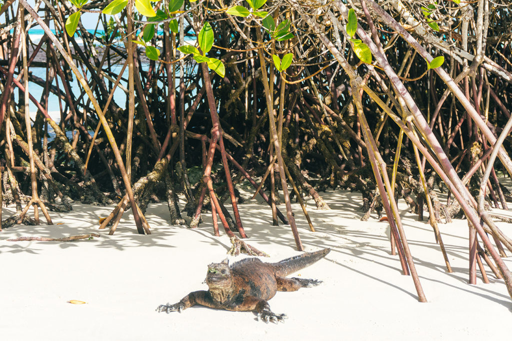 Visit Galapagos for the wildlife.