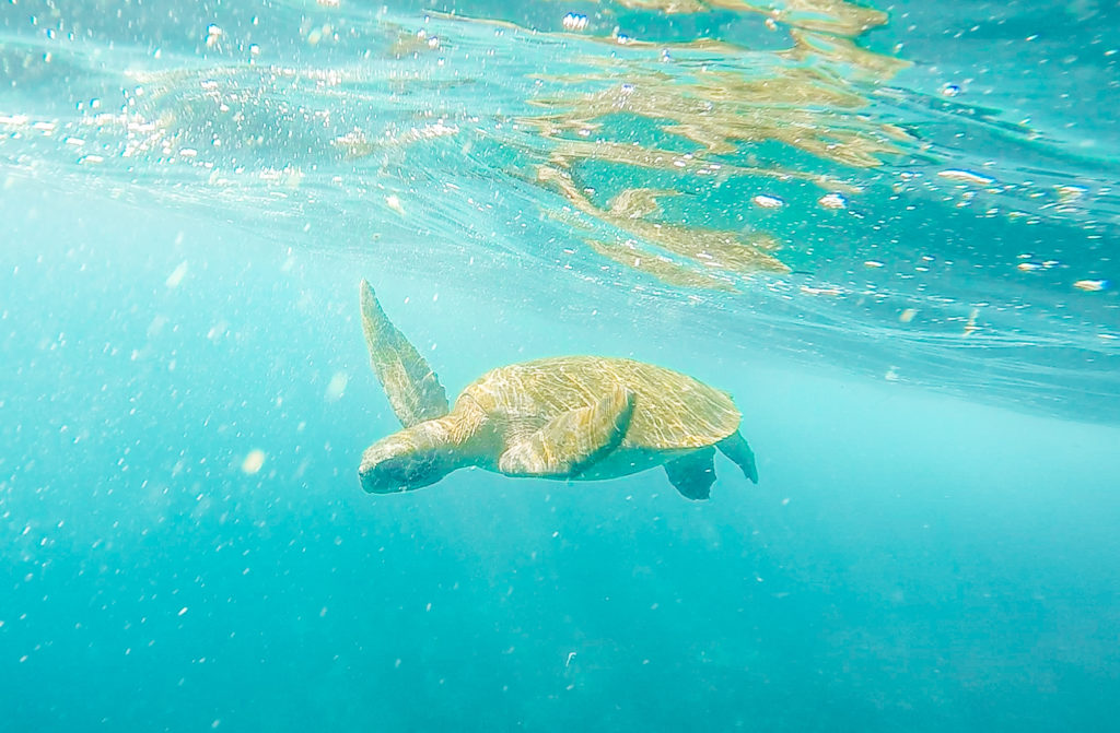 Galapagos Islands packing list: what to bring for swimming and snorkeling