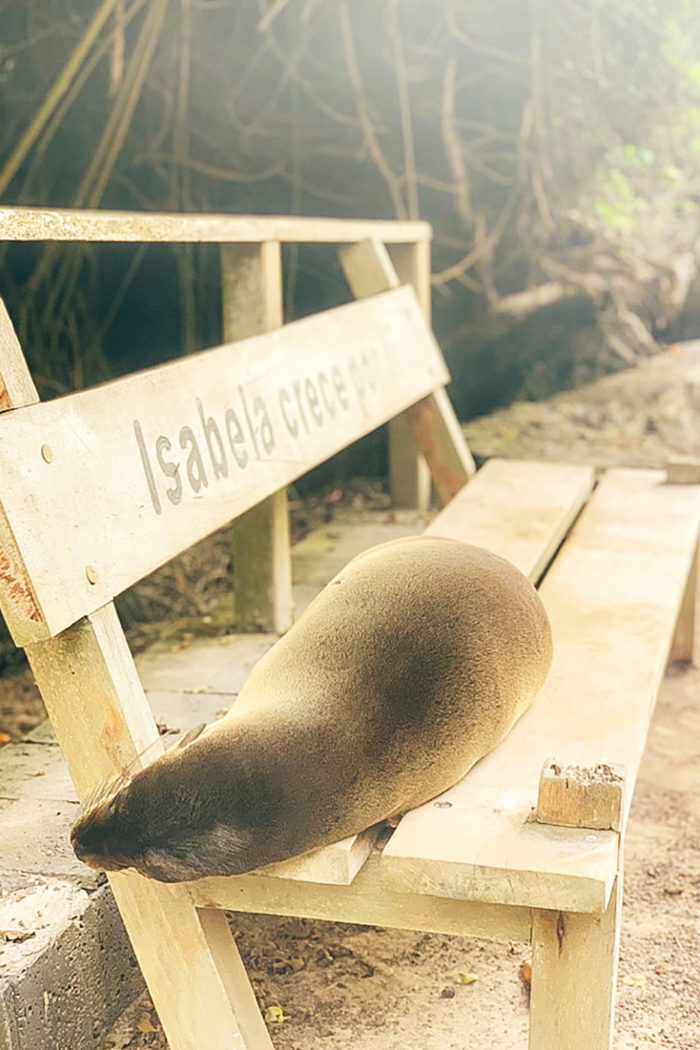 A Guide to Visiting Isabela Island Galapagos