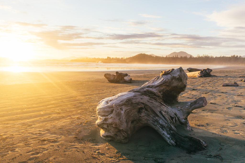 Log lying on Cox Bay.